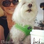 Starbucks puppy