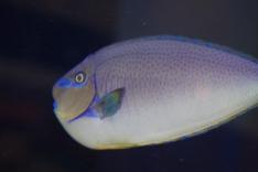 fish_tank_tokyo_blue_asian_restuarant